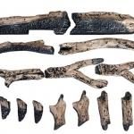 14-piece-logs-530